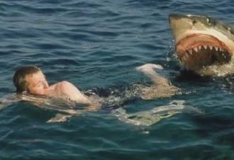 Как избежать контакта с акулой