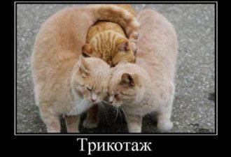 свежие демотиваторы, коты