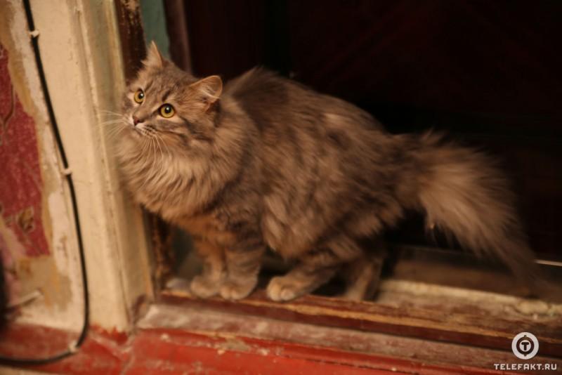 Замерзающий кот нашел новый дом