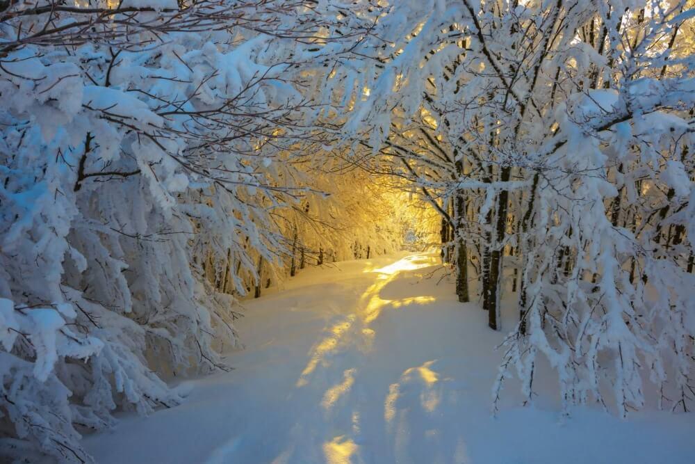 зима сказочно прекрасна, Национальный парк Кампина, Италия