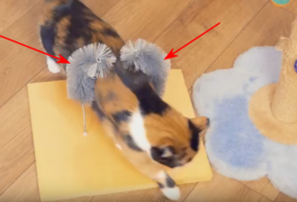 dla-kota