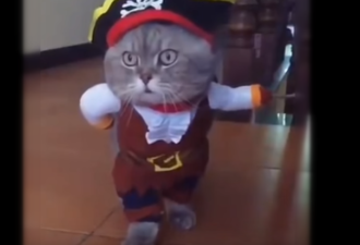 cat-costum