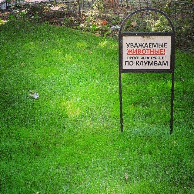 тупые объявления, по газону не ходить