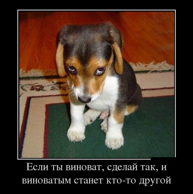 свежие демотиваторы, щенок