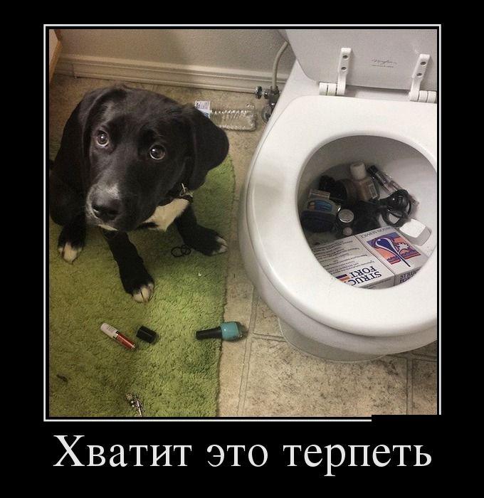свежие демотиваторы, собака