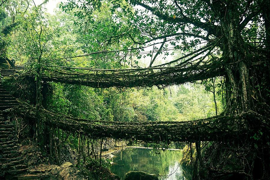 Удивительные мосты, Мост из корней, Индия