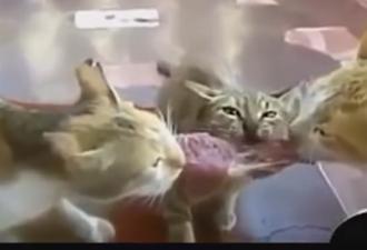 забавные моменты из жизни животных