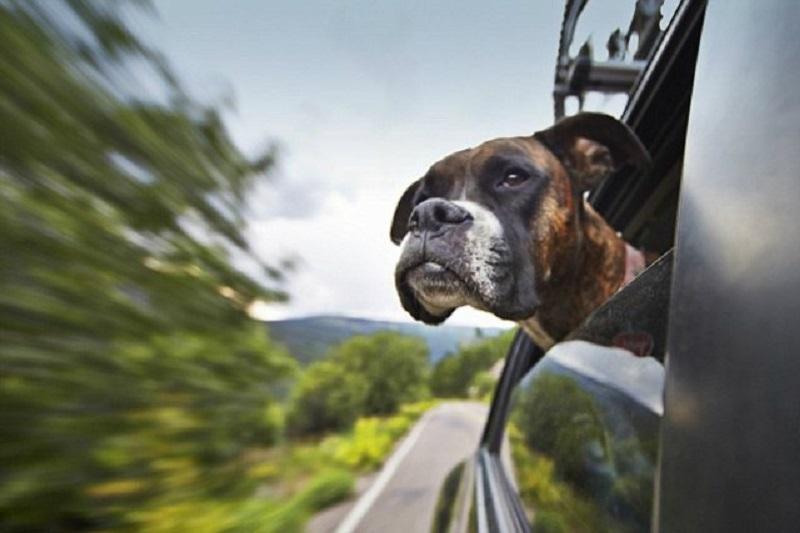 Как сэкономить деньги на бензине, закрывай окна