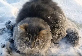 Замёрзшего кота спасли от мучительной смерти