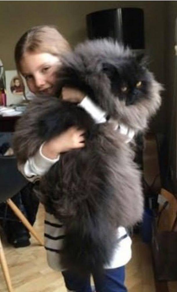 приютили котёнка