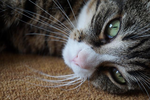 кот любит вас