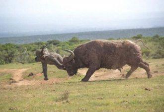 Слониха моментально пришла на помощь детенышу
