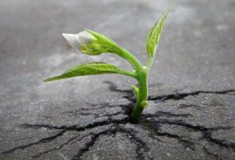 Притча о вере в себя и свои силы