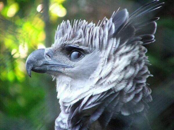 Необычные птицы