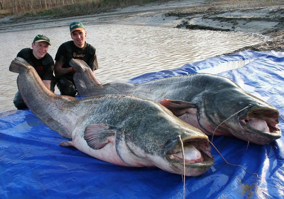 Редкие гигантские животные