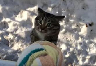 Самый самостоятельный кот