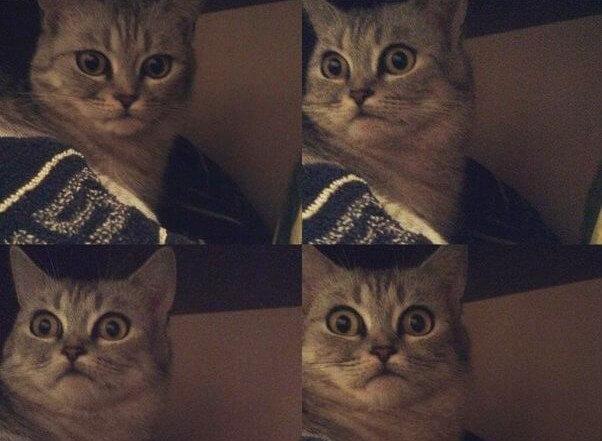 Почему домашние кошки ложатся спать с хозяевами