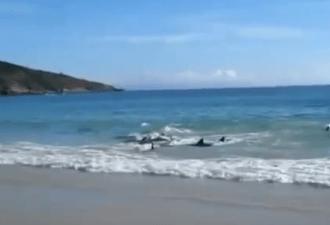 появилась стая дельфинов