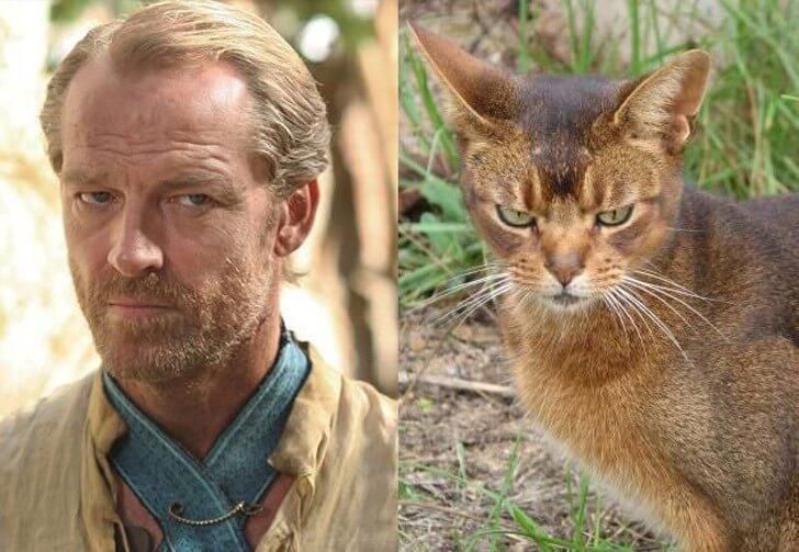 """Как выглядели бы актеры """"Игры престолов"""" будь они котами…"""