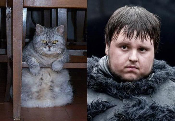 """актеры """"Игры престолов"""" будь они котами"""