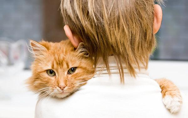 Кошки способны находить и лечить больные места