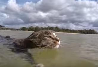 Кошка Диджа