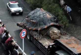 Аномально большие животные
