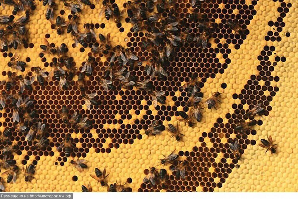 Собиратели дикого мёда