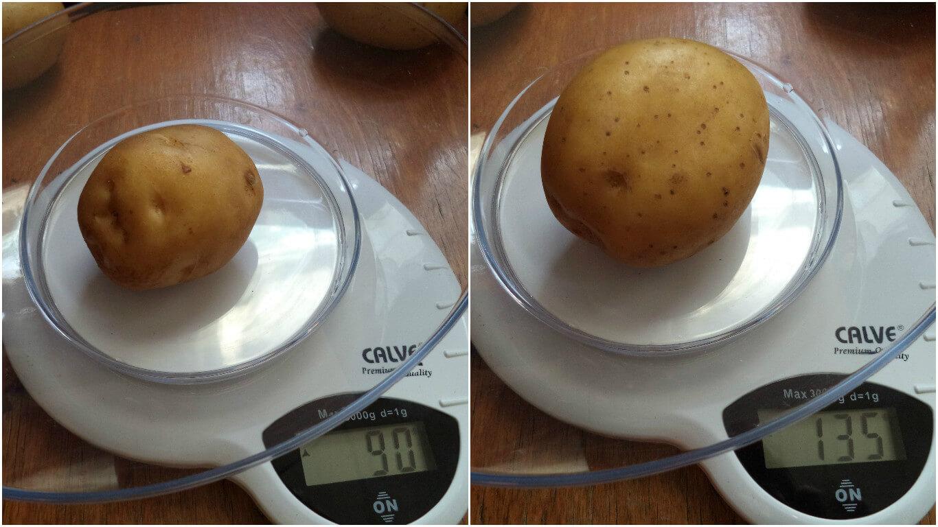 Советы по подготовке семенного картофеля