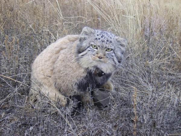 нашел четырех крошечных беспомощных котят