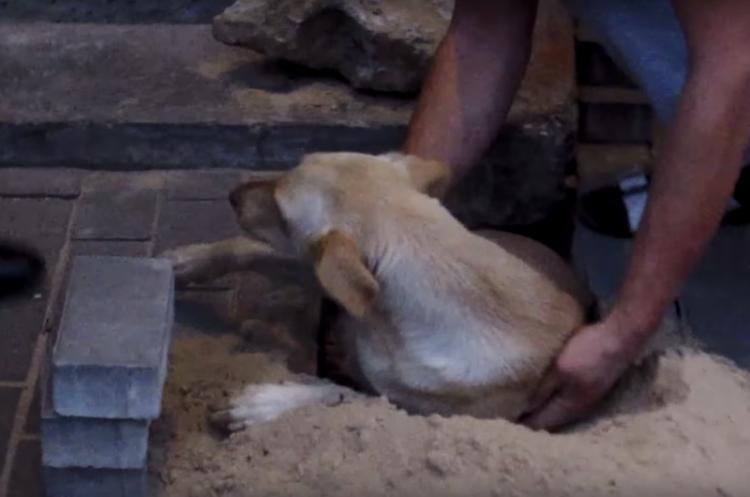 заживо похоронили собаку