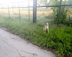 собаку к забору