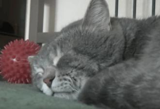 Котейка мирно спал