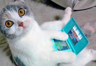 Приколы с котами и кошками