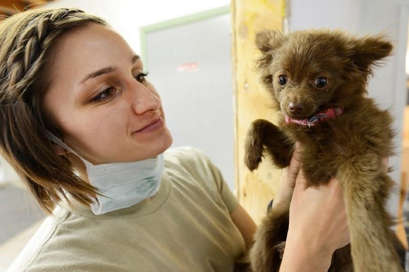 ветеринарных врачей