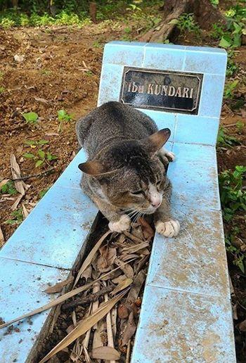 заметил на кладбище кошку