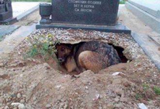 собака скорбит по своему хозяину