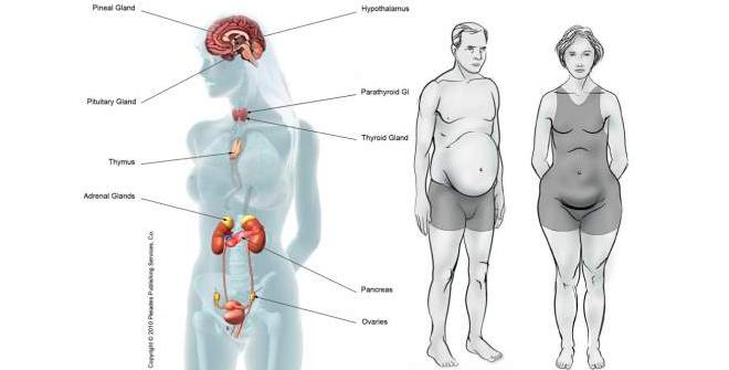 гормональный дисбаланс