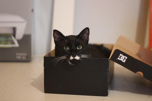 спасать котейку из выгребной ямы