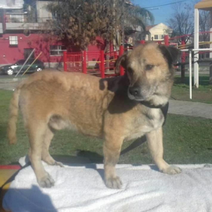 5 часов спасатели боролись за жизнь собаки