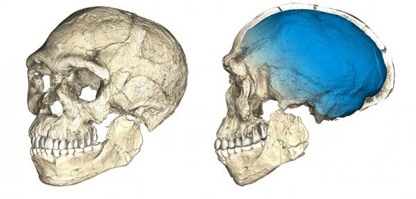 Антропологи нашли останки человека