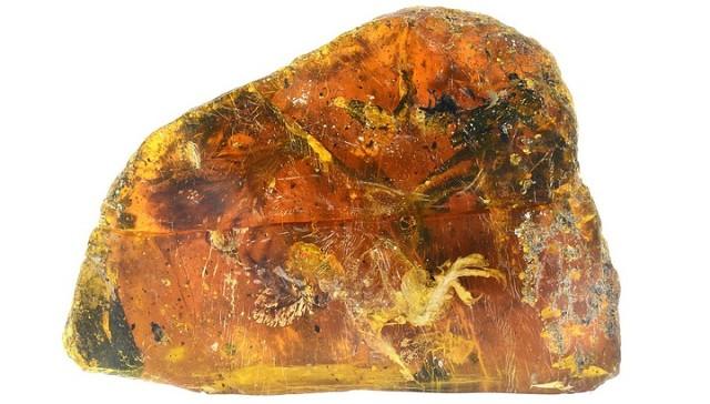 птенец, застывший в янтаре