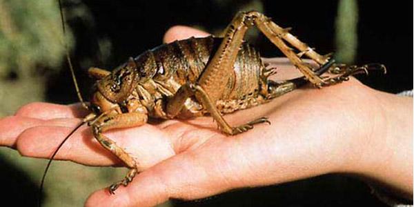 10 самых живучих существ