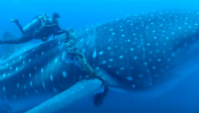 Акула просила дайвера о помощи