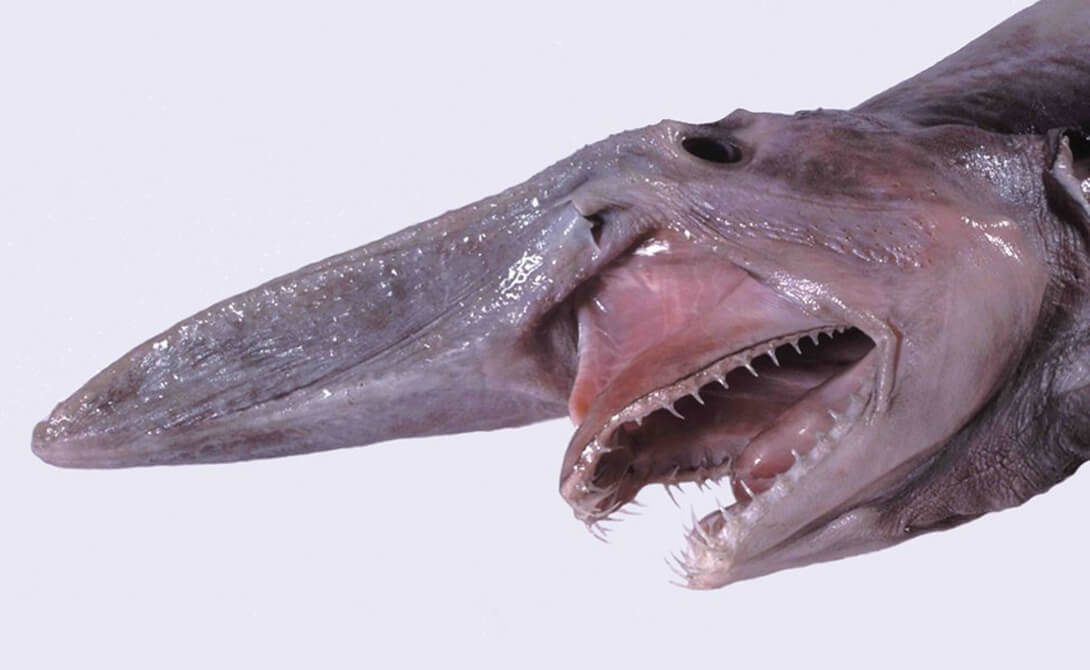 Самые странные акулы