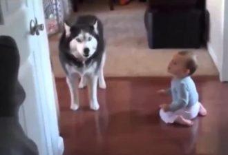 оставить собаку наедине с ребенком